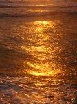 flüssiges Gold Ostsee Hiddensee