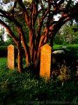 Alte Grabsteine auf dem Inselfriedhof Hiddensee
