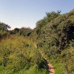 Hochuferweg kurz vor dem Enddorn auf Hiddensee