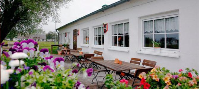 Stranddistel in Neuendorf auf Hiddensee
