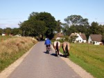 Man auf Fahrrad führ Pferde heim. Grieben/Hiddensee