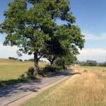 Die Strasse von Kloster nach Grieben. Gepflastert und auf der Westseite mit Bäumen bestanden.