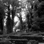 Gräber zwischen alten Buchsbaumhecken und unter efeubewachsenen Bäumen. Im Hintergrund die Inselkirche von Hiddensee.