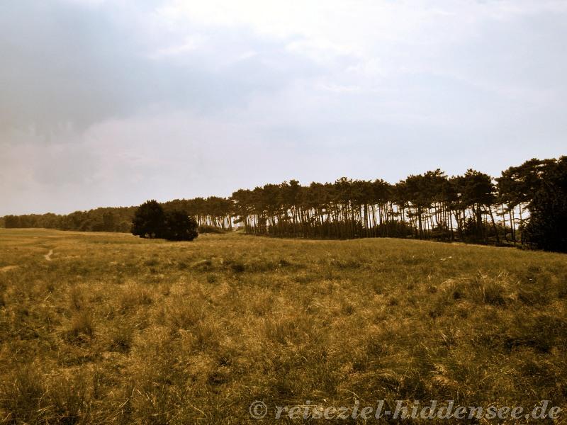 Küstenschutzwald Gellen Hiddensee