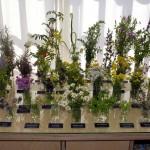 Typische Pflanzenvertreter Hiddensees