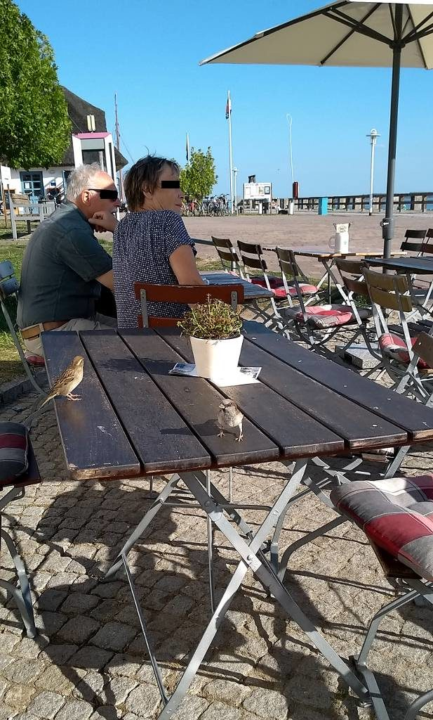 Freche Spatzen im Außenbereich von Schillings Hafenamt in Kloster auf Hiddensee