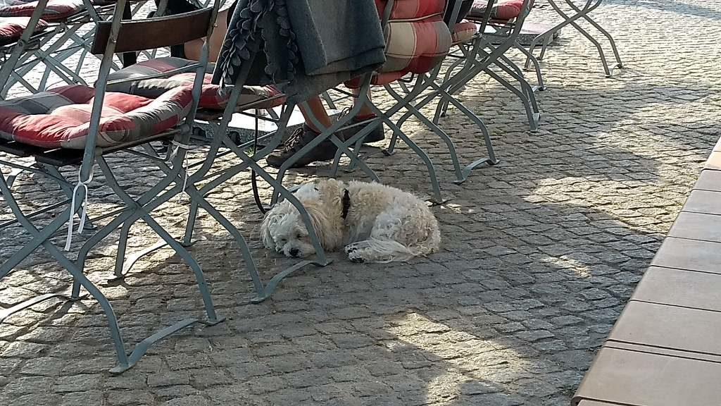 müder Hund in schillings Hafenamt auf Hiddensee