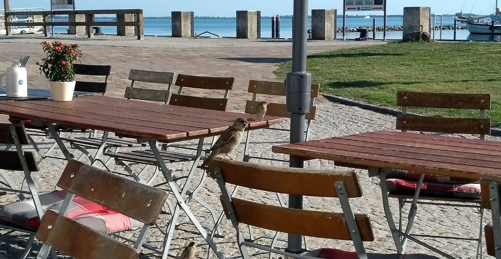 Urlaub und Gastronomie auf Hiddensee wieder möglich? Corona Lockerungen in Mecklenburg Vorpommern