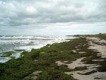 Manchmal übertreibt es die Ostsee etwas - Algen- und Seetang Teppich am Neuendorfer Strand