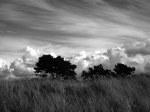 Grasbewachsene Dünen und Kiefern - auch das ist ein häufiges Bild am Neuendorfer Strand.
