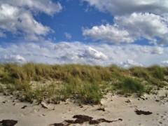 Die Stranddüne im Bereich von Neuendorf